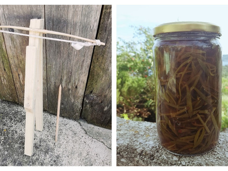 What do crossbows and pickled rock samphire have in common?