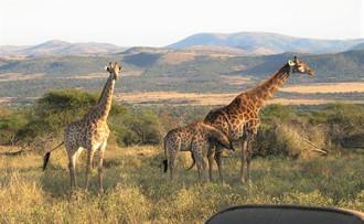 2014_Südafrika (8).jpg