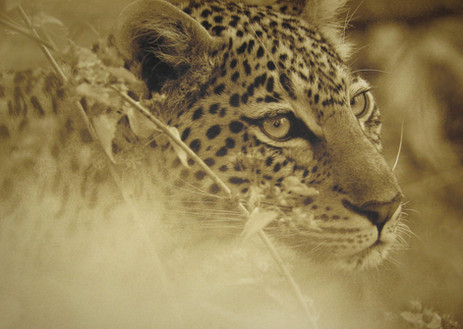 2014_Südafrika (7).jpg