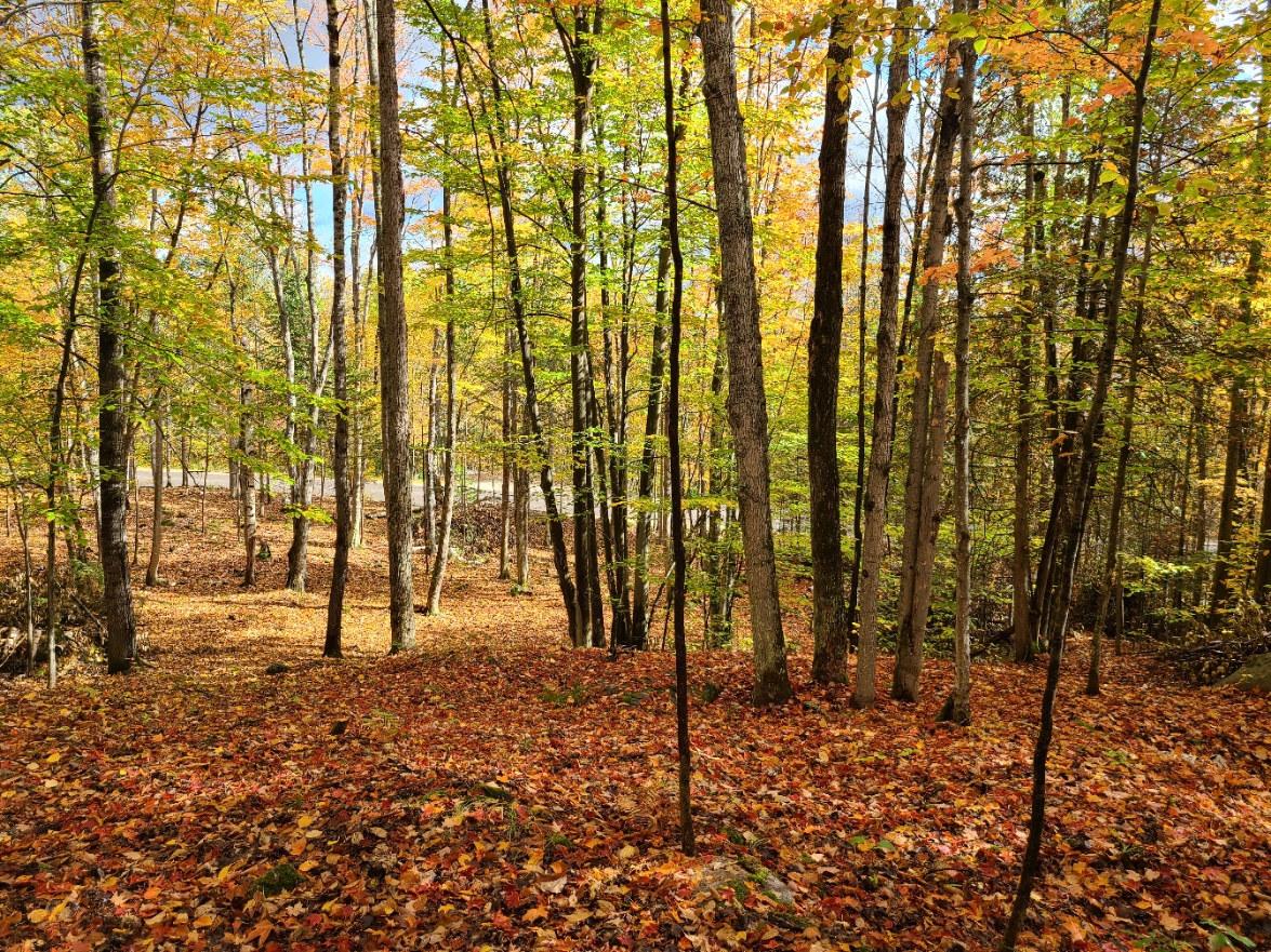 Lot 11 woods.jpg