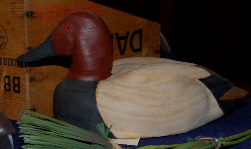 Antique Canvasback Drake.JPG