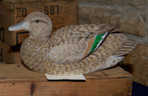 Greenwing Teal Hen