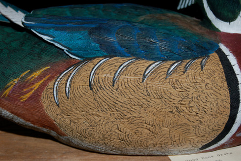 Woodduck Drake detail