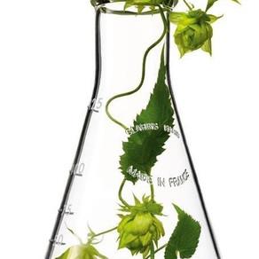 Você sabia que o Colágeno pode ser de origem vegetal?