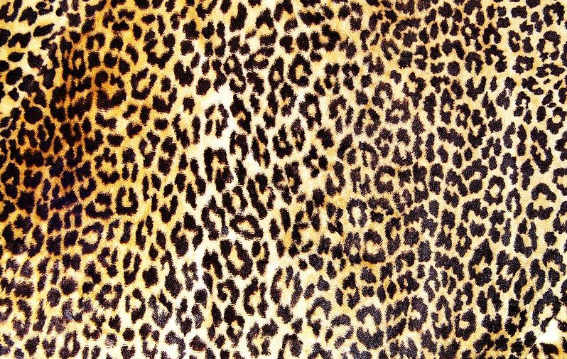 huid van de luipaard
