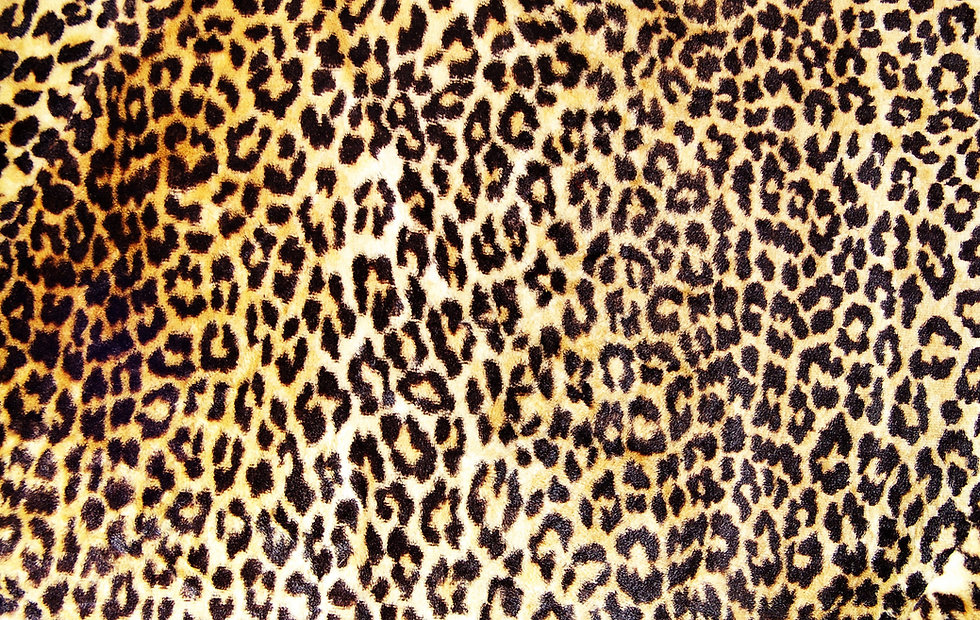 da pele do leopardo