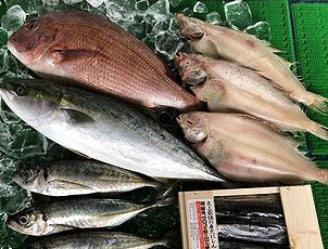 菊池魚店.jpg