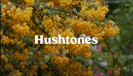 Hushtones -I've Got Time Video
