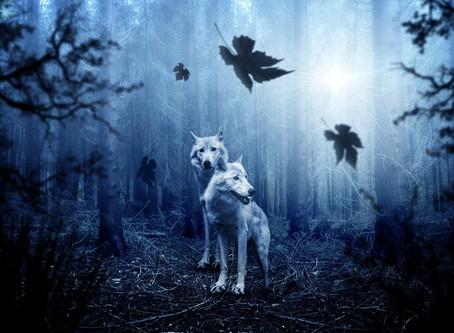 魂の種類 - 人間と動物