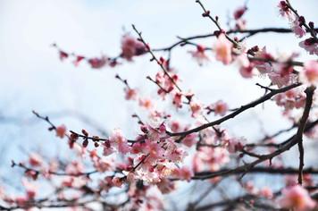Sakura, Japan. 2010