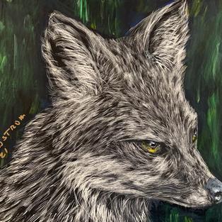 Rays Gray Fox
