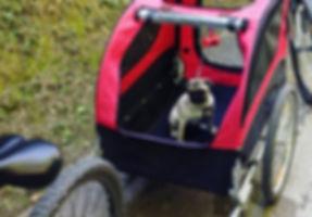 Bike trailer for pets Bear Trail
