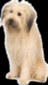 veterinarian peterborough