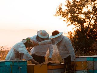 Confira o estudo onde uma molécula em veneno de abelha destrói células de câncer de mama