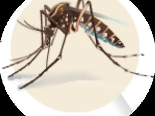 O que fazer se estiver zika