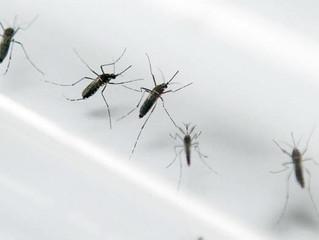 Checklist contra os mosquitos