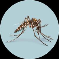 Sobre o zika