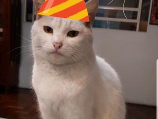 08 de Agosto é o Dia Internacional do Gato.