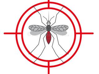 Como combater o mosquito da dengue em 15 minutos
