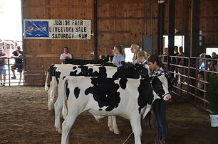 jr fair dairy beef.jpeg