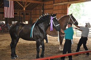 draft horse halter.jpeg