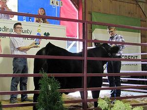 Jr livestock large.jpg