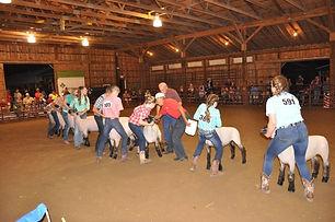Jr Sheep show.jpg