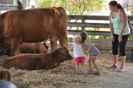 toddlers petting cow.jpeg
