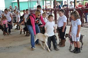 market goat.jpeg