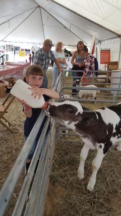 feeding babay cow.jpg