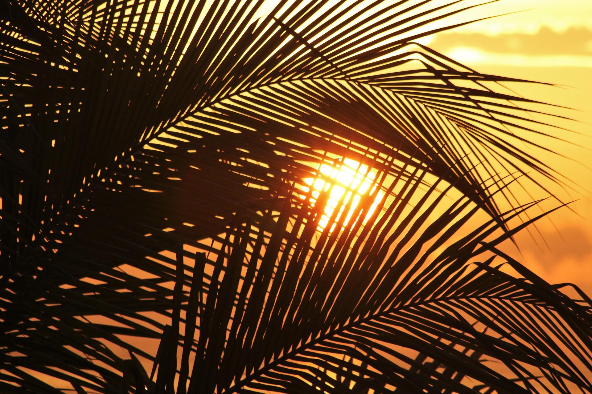 sun-of-jamaica-1111756_1920