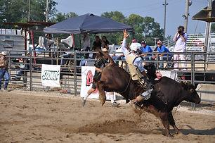 Buckin Ohio bull.jpeg