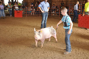 Jr fair swine.jpeg