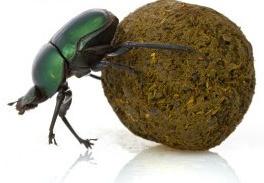 Dung-beetle-300x200.jpg 2014-12-29-3:5:29