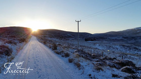 Dorback Sunrise