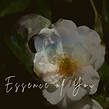 Essence of You Cover Art.png
