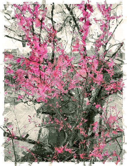 «Cherry Blossom Kyoto» – price from