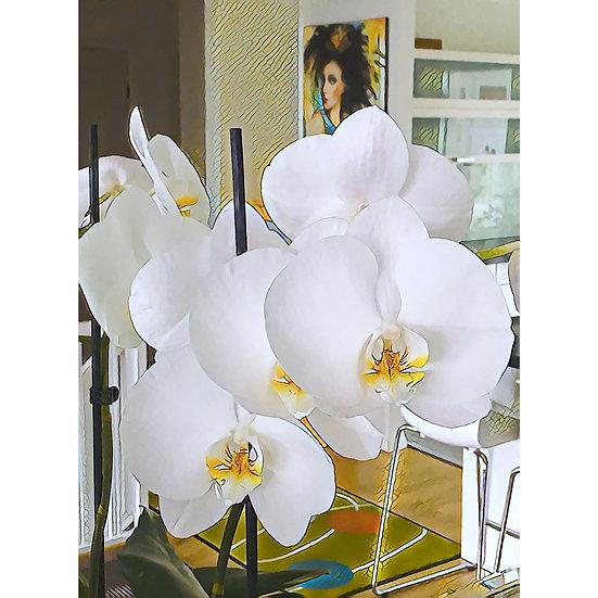 «Orkide» – FOTO-image