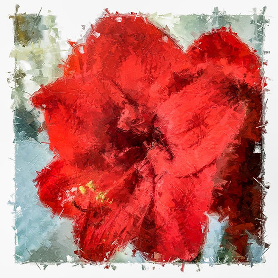 «The Big Amaryllis» – price from