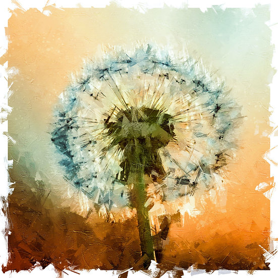 «Dandelion»