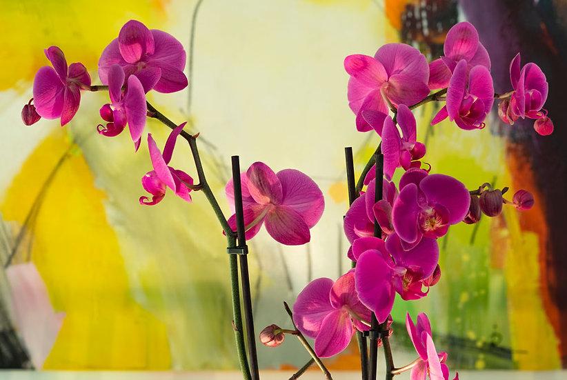 «Magenta Orchid» – Photoimage