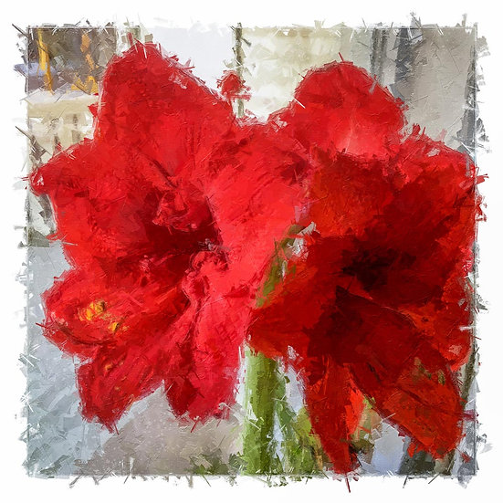 «Double Amaryllis» – price from
