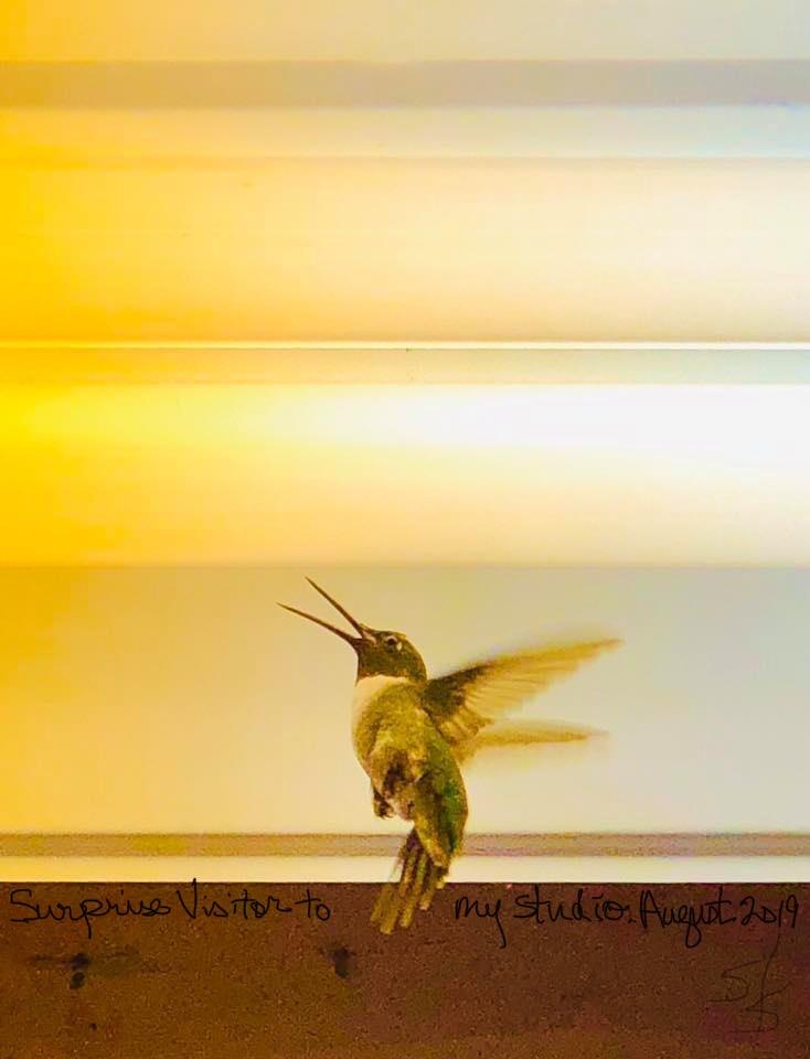 Hummingbird Visits My Studio