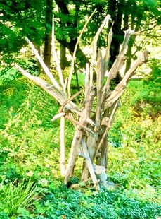Driftwood Fantasy