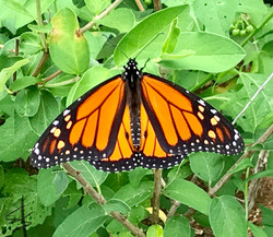 Monarch Excellence