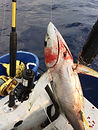 Penn Torque electric fishing reel