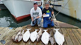 Several halibut caught with electric reels