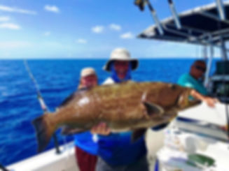 grouper caught with electric fishing reel