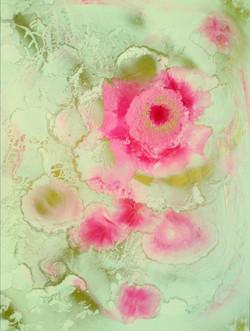 Rose 1 (600 x 452) (2)