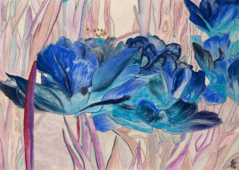 tulipa caerulea – pastell  auf bütten 58 x 47